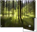 Forest Light Impression  Bavaria  Germany