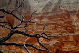 The Branches of Dead Tree Against the Colorful Cliffs in Kodachrome State Park  Utah
