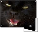 Black Cat in Burwell  Nebraska