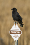 A Northwestern Crow  Corvus Caurinus  Perched on a Government Sign