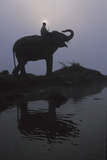 An Elephant with its Mahout Stand at the Edge of the Rapti River Near Sauraha