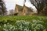 White Flowers with a Small Church in Background; Northumberland England