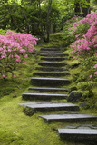 Rock Stairway Along a Moss Covered Hill with Flowering Bushes  Portland