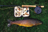 Wild Brown Trout and Fishing Rod