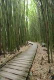 Hawaii  Maui  Kipahulu  Haleakala National Park  Trail Through Bamboo Forest on the Pipiwai Trail