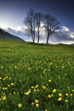 Meadow with Yellow Dandelions  Gap  France