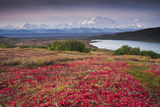 Early Morning View of Mt Mckinley and Wonder Lake During Autumn