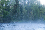 Fly Fisherman Fights Dolly Varden on the Line at Quartz Creek Kenai Peninsula Alaska Fall