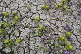 Wildflowers Growing in Cracked Soil  Capitol Reef National Park  Utah