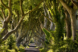 The Reputedly 300 Year Old Beech Trees  the Dark Hedges in Stranocum