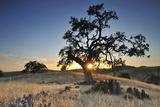 Open Field with Rock and Oak Tree Near Yosemite National Park  California