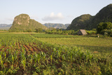 Sunrise in the Pinar Del Rio Agricultural Region  known for Tobacco and Mogotes