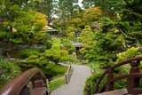 Bridges Link the Paths in the Japanese Tea Garden  the Oldest Public US Japanese Garden