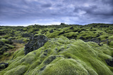 Moss-Covered Lava Field in Vik  Iceland
