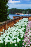 White Tulips in the Historic Schwerin Palace