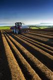 Potato Farming in Northern Ireland