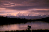 Alaska Range Moose Bull Wonder Lake Denali Natl Park Interior Alaska Summer Trees Snow