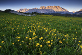 Meadow with Yellow Flowers and Mountains in the Distance  Near Gap  France