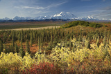 Scenic View of Mt Mckinley and the Alaska Range with Taiga and Fall Colors