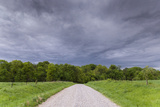 A Gravel Road Disappears into a Field of Trees Beneath a Stormy Sky