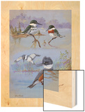 A Painting of Two Belted Kingfishers and Two Texas Green Kingfishers