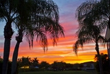 Silhouetted Palm Trees and a Colorful Sky over Coastal Homes at Sunset