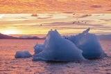 Blue Glacial Ice Floating at Sunset with Gulls