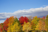 Brilliantly Colored Trees During in Autumn