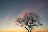 An Oak Tree on the Shore of Long Island Sound at Sunrise