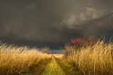 A Colorful Rural Road Leads Toward a Storm