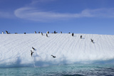 Adelie Penguins on a Frozen Slope