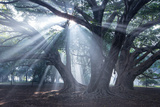 The Sun's Rays Shine Through Trees in Mist in Ibirapuera Park
