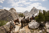 A Horse and Rider Lead a String of Pack Animals in King's Canyon National Park  California  USA
