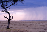 A Rain Storm Approaches a Lone Jackal in Masai Mara National Reserve