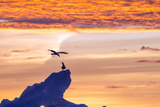 Gulls on Glacial Ice at Sunset