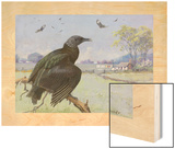 A Painting of a Black Vulture on a Branch While Many More Fly