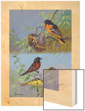 Painting of Two Different Oriole Species and their Families