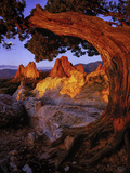 A Juniper Frames South Gateway Rock in Garden of the Gods  Colorado
