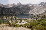 Horses and Riders Lead a String of Pack Animals Near Sixty Lake Basin