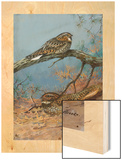 Painting of a Whippoorwill and a Chuck-Will'S-Widow