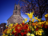 Spring Flowers at the Priory  Holywood  County Down