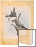 A Painting of a Kingfisher Perched on a Branch and Eating a Fish