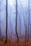 Fog in Autumn Beech Forest Crimea  Ukraine