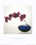 Orchids (1985)