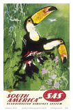 South America - Tocu Toucans - SAS Scandinavian Airlines System