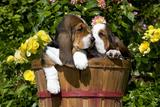 Basset Hound Pups in Flowers  Burlington