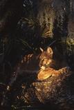 Florida Panther (Felis Concolor)