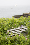 Lobster Trap Among Wild Roses and Vetch Above Rocky Beach