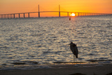 Bird Silhouetted in Front of Bridge