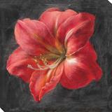 Vivid Floral 3: Amaryllis